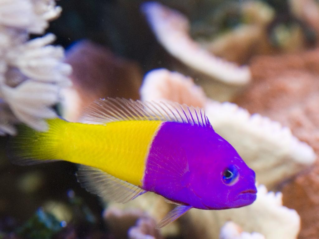 Make your home bright with marine aquarium fish aquarium for Saltwater reef fish