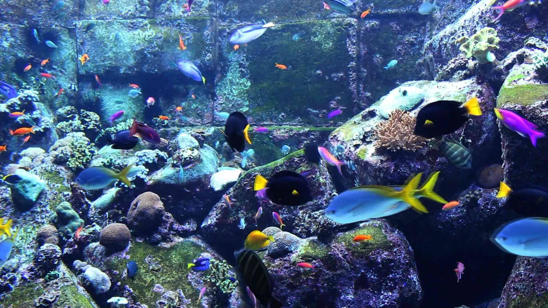 Marine Aquarium Fish Wallpaper