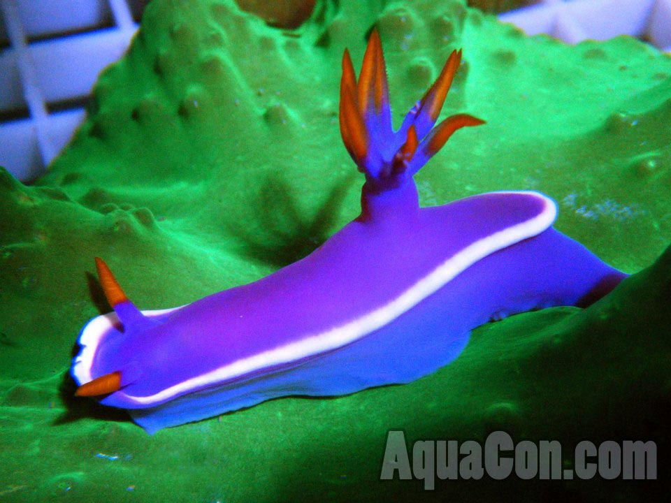 Marine Aquarium Reef Safe Fish