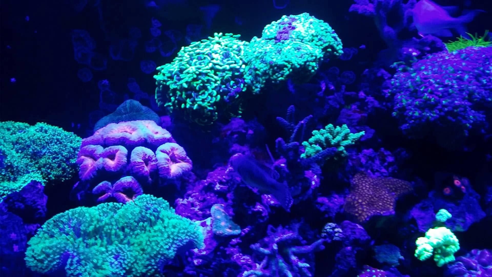Marine Coral Reef Aquarium