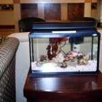 Marine Fish Aquarium Setup