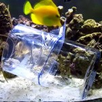 Marine Reef Aquarium Fish