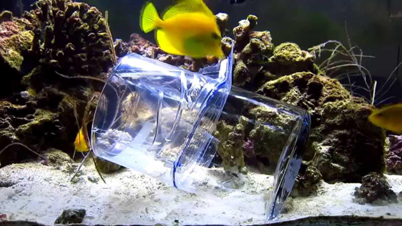 Marine reef aquarium fish aquarium design ideas for Reef tank fish