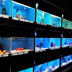 Marine Saltwater Aquarium Fish