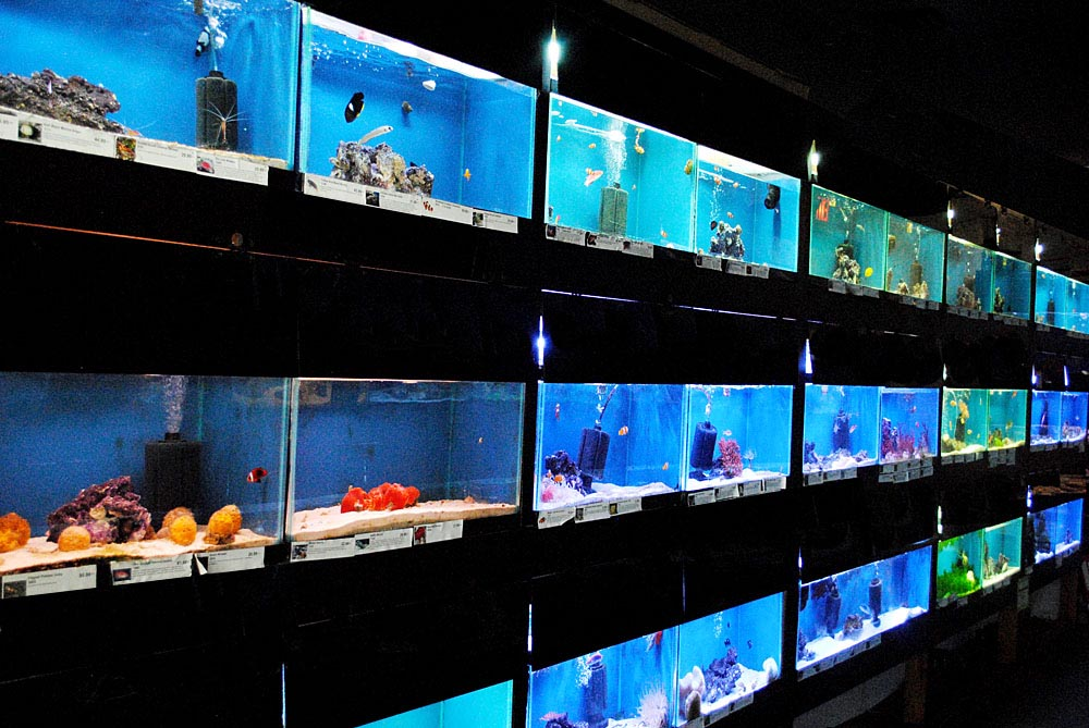 Marine saltwater aquarium fish aquarium design ideas for Salt water fish store