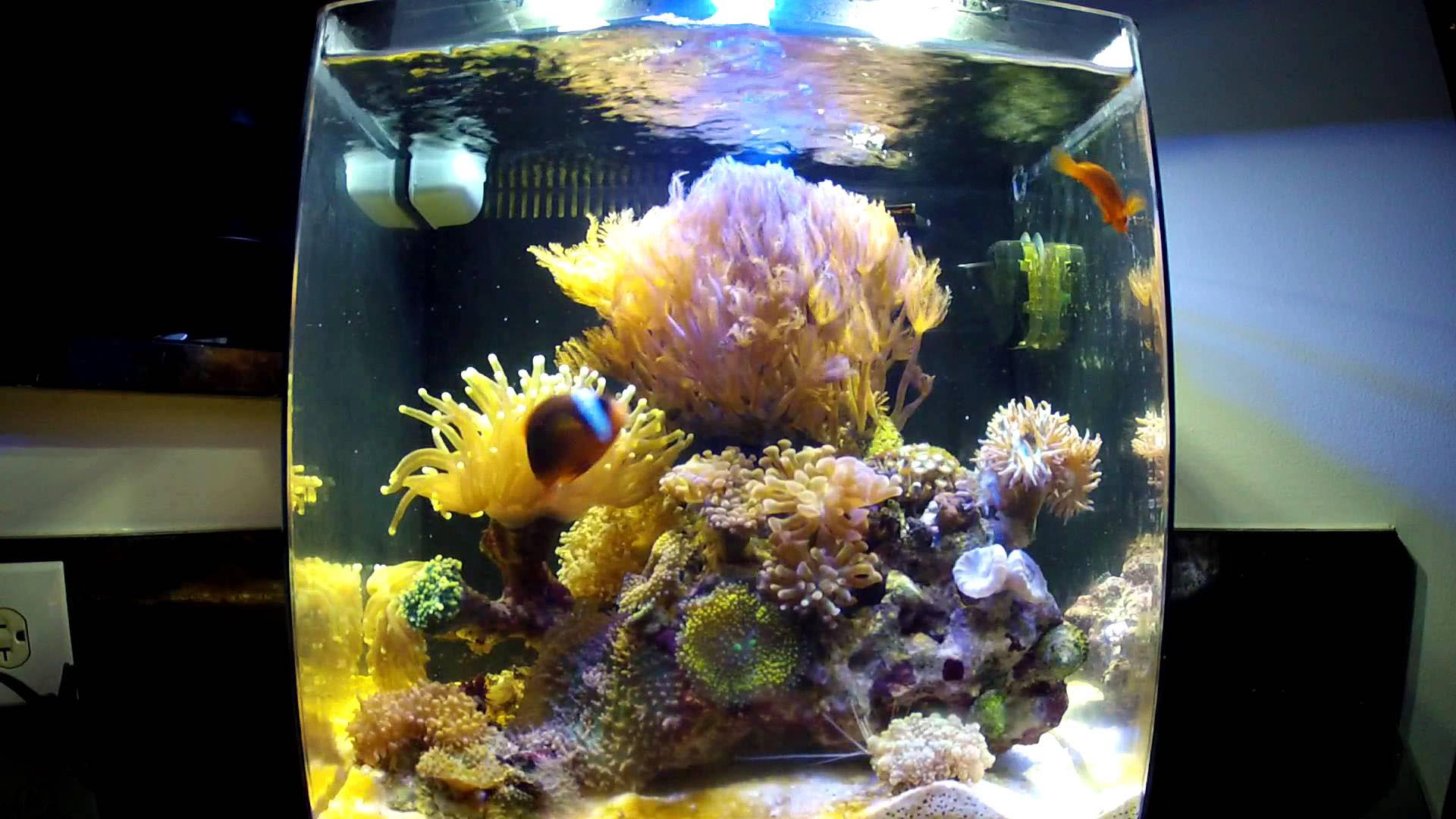 Mini Coral Reef Aquarium