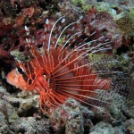Most Exotic Saltwater Aquarium Fish