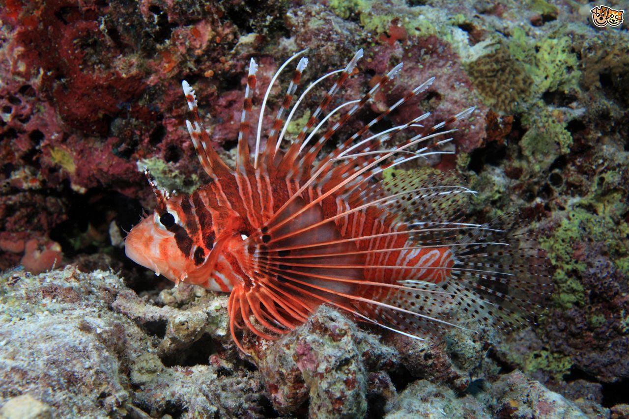 Most Exotic Saltwater Aquarium Fish