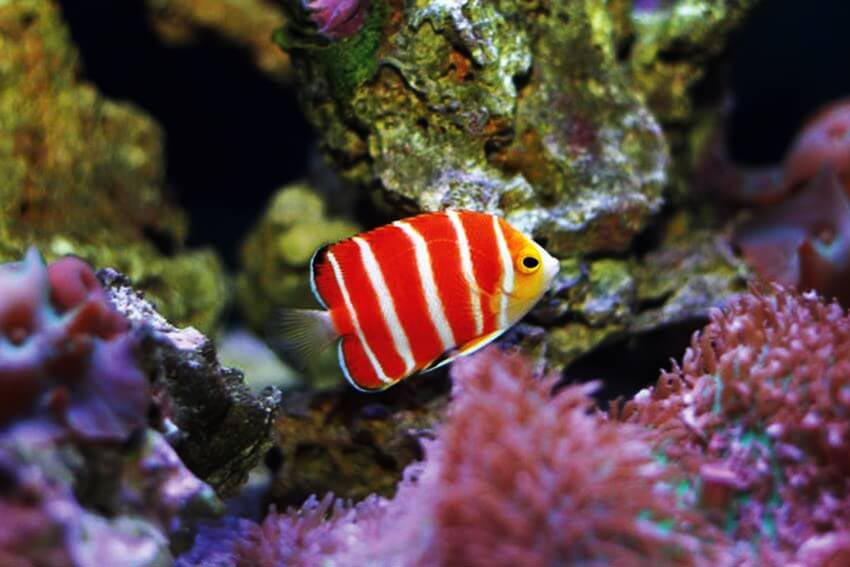 Most popular aquarium fish aquarium design ideas for Most expensive saltwater fish