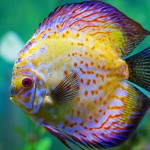 Most Popular Marine Aquarium Fish