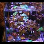 Nano Marine Aquarium Fish