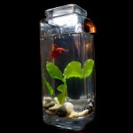 Noclean Aquarium Betta Fish Tank