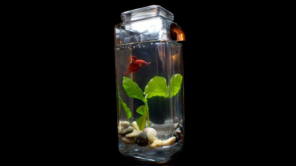 Noclean aquarium betta fish tank aquarium design ideas for Best way to clean a fish tank
