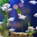 Non Tropical Aquarium Fish