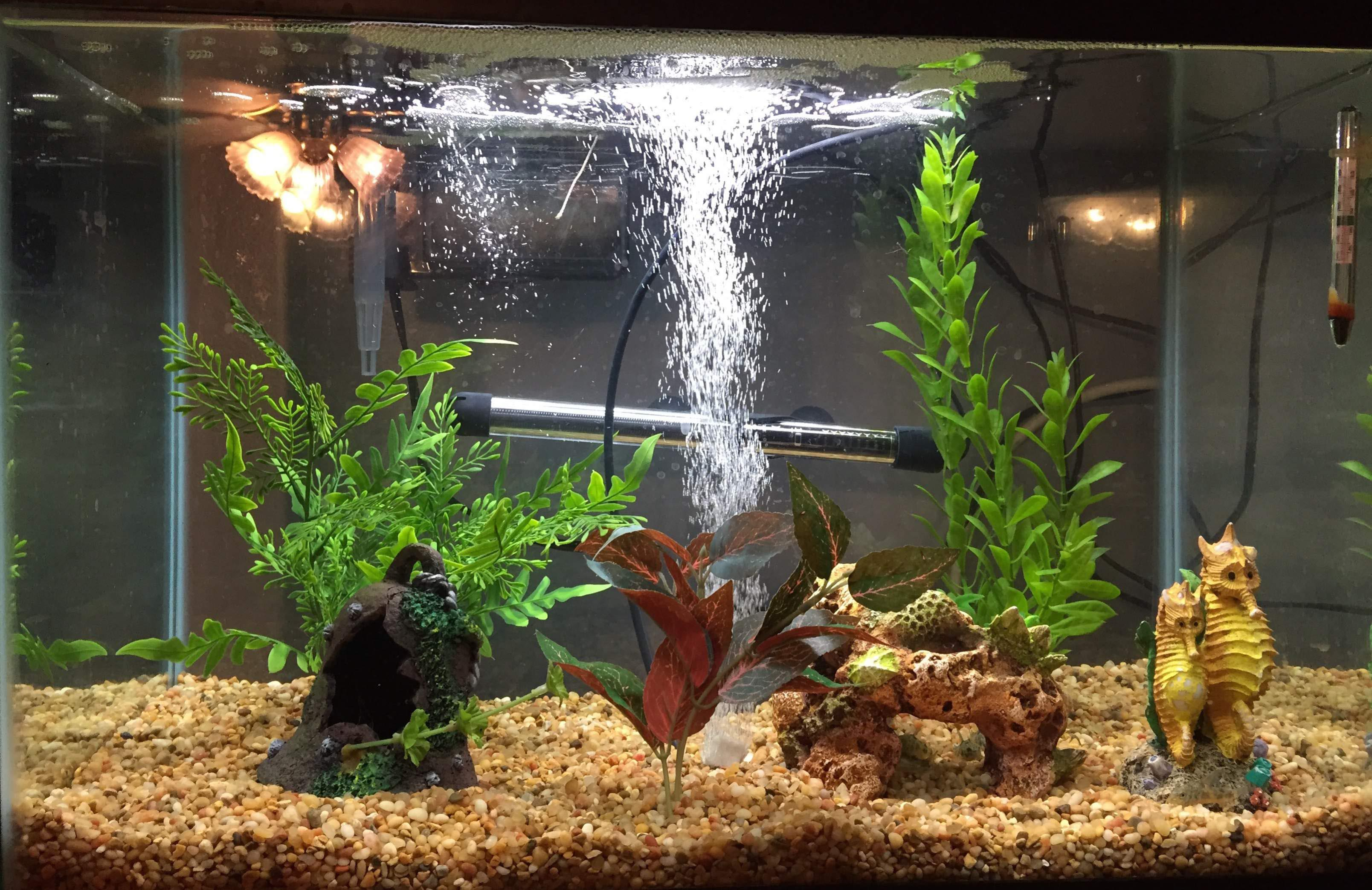 Petco live aquarium plants aquarium design ideas for Aquarium wood decoration