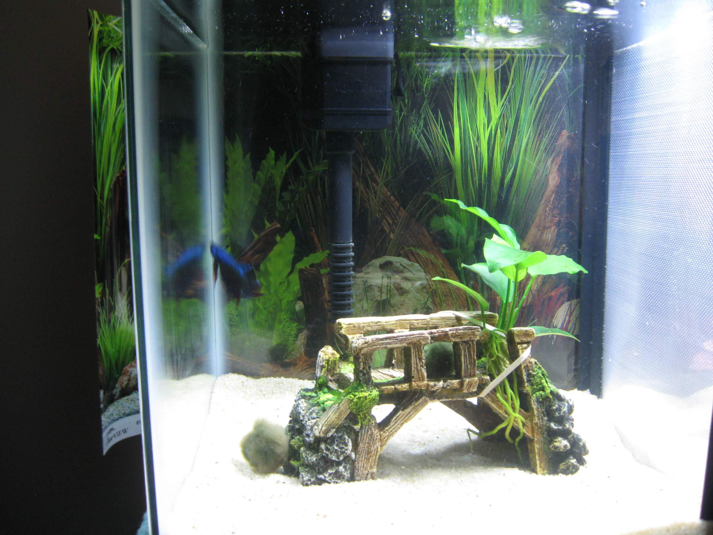 Aquarium Design Homemade - Homemade Ftempo