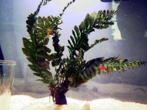 Petsmart Live Aquarium Plants