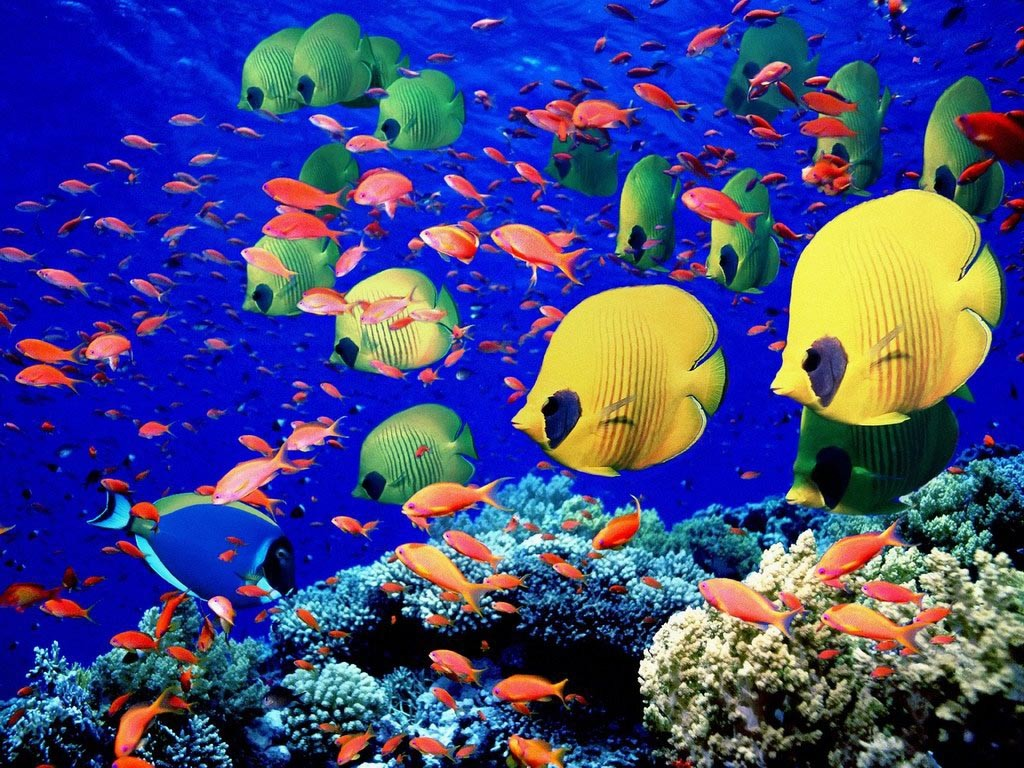 Pictures of Saltwater Aquarium Fish