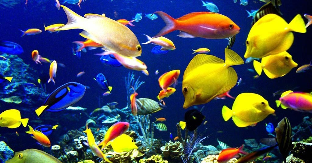 Pictures of Tropical Fish for Aquariums