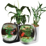 Plants for Betta Fish Aquarium