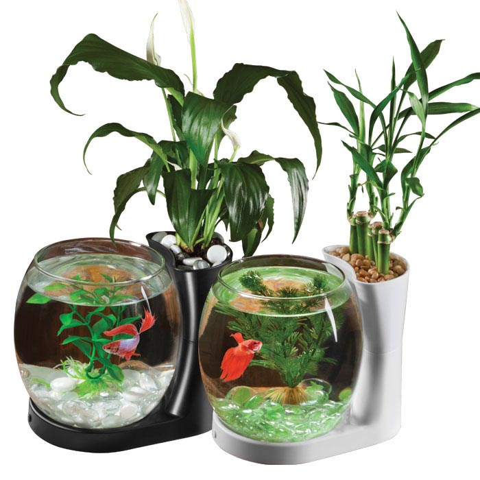 Plants for Betta Fish Aquarium