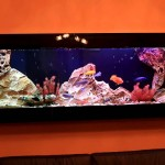 Plasma Wall Mount Fish Tank Aquarium