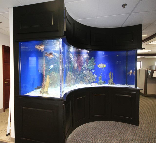 Popular Marine Fish for Aquarium