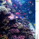 Popular Saltwater Fish for Aquariums