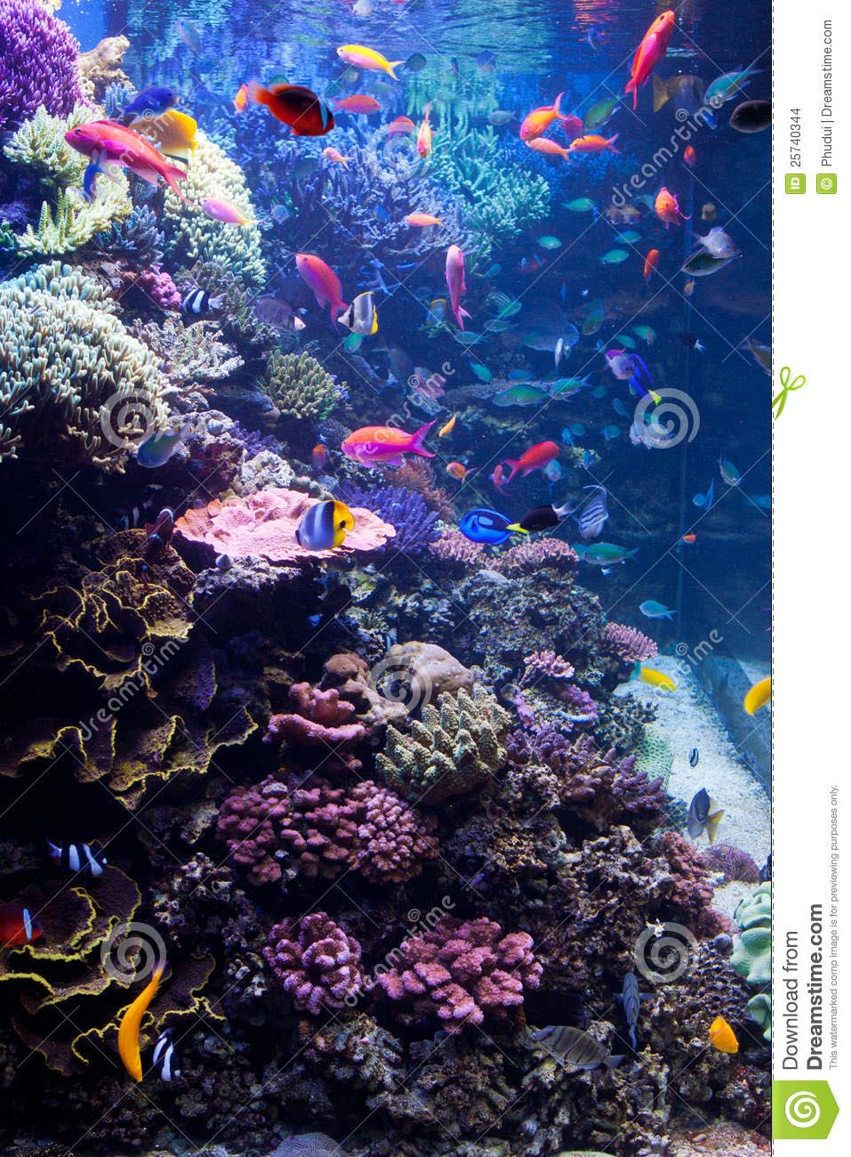 Popular Saltwater Fish for Aquariums