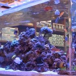 PPM for Salt Water Aquarium