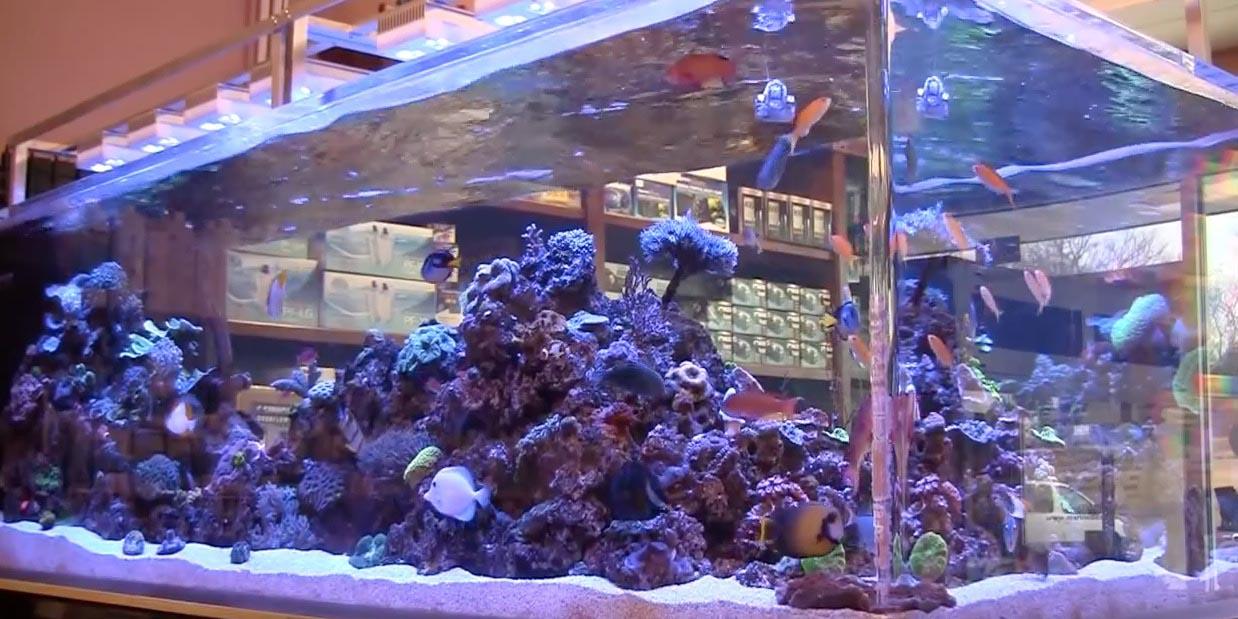 PPM for Salt Water Aquarium