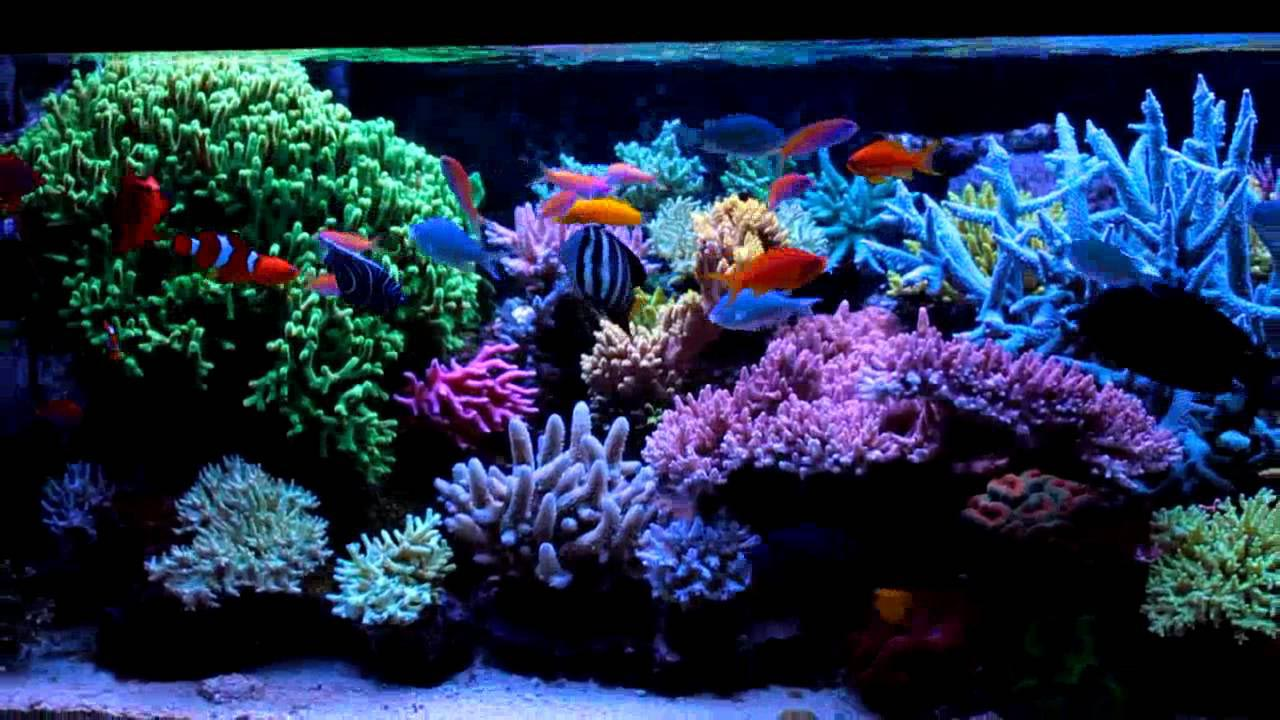 Beauty and luxury with saltwater fish aquarium aquarium for Saltwater reef fish