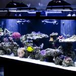 Reef Aquarium Coral Identification