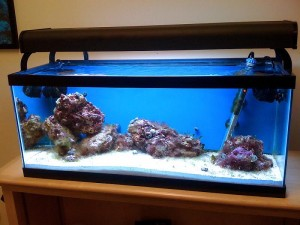 Salt Water Aquarium Images
