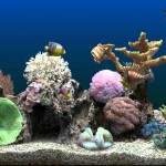 Salt Water Bath Aquarium
