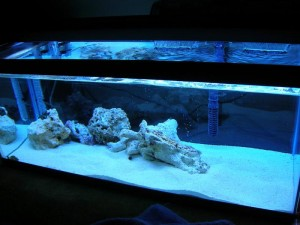 Salt Water for Saltwater Aquarium
