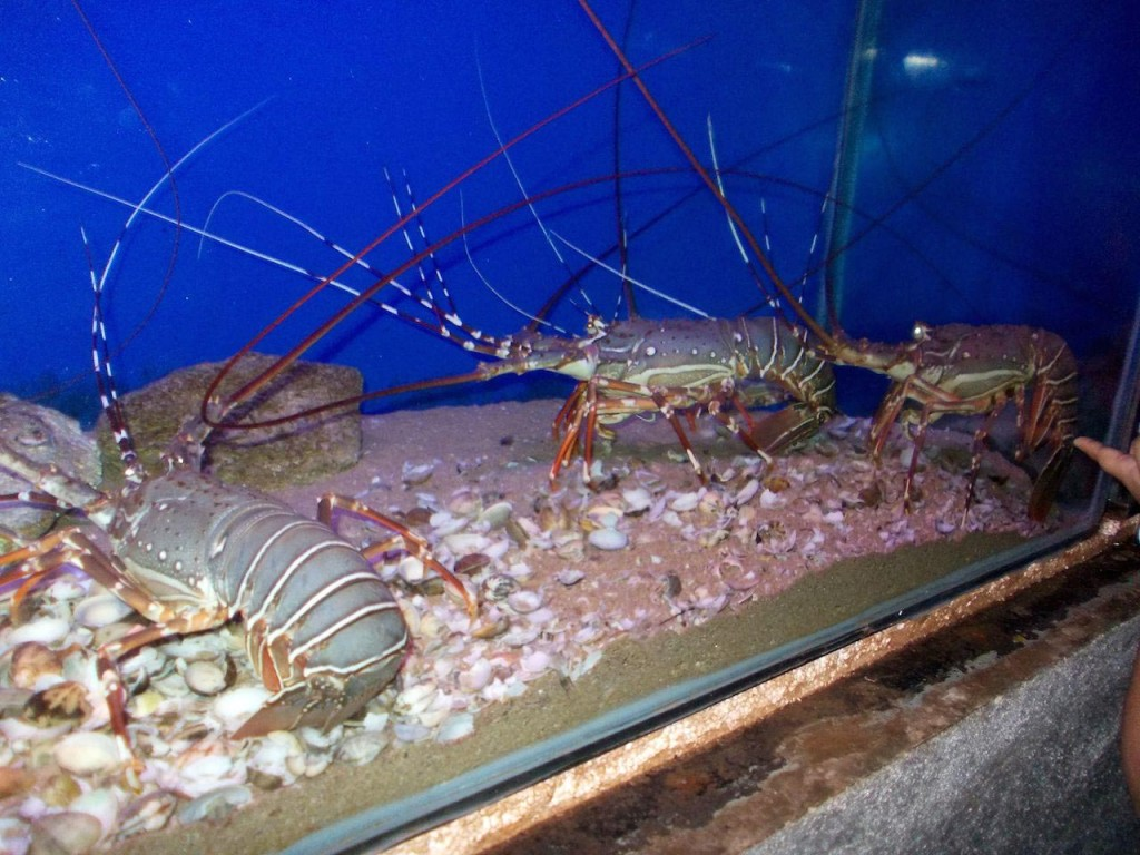 Salt Water Prawn Aquarium