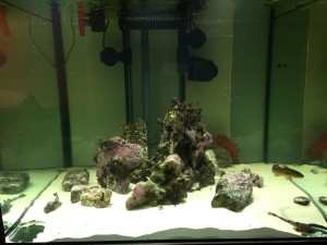 Salt Water Pumps for Aquariums