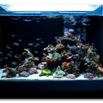 Salt Water Rocks Aquariums