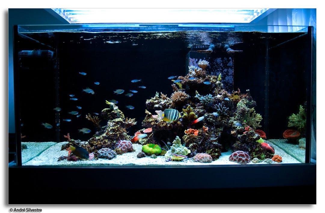 Salt Water Rocks Aquariums Aquarium Design Ideas
