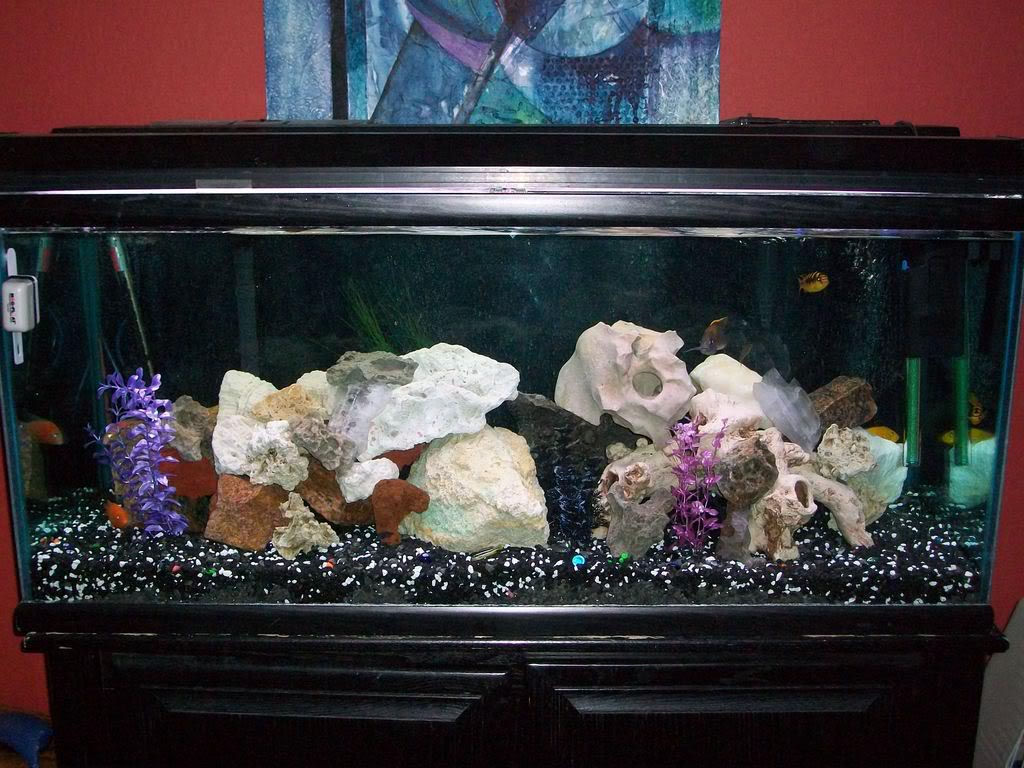 Salt Water Shells in Freshwater Aquarium