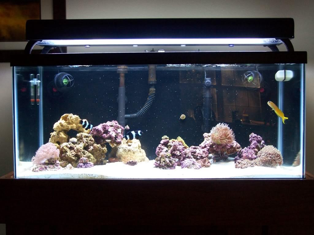 Salt Water Skimmer for Aquariums