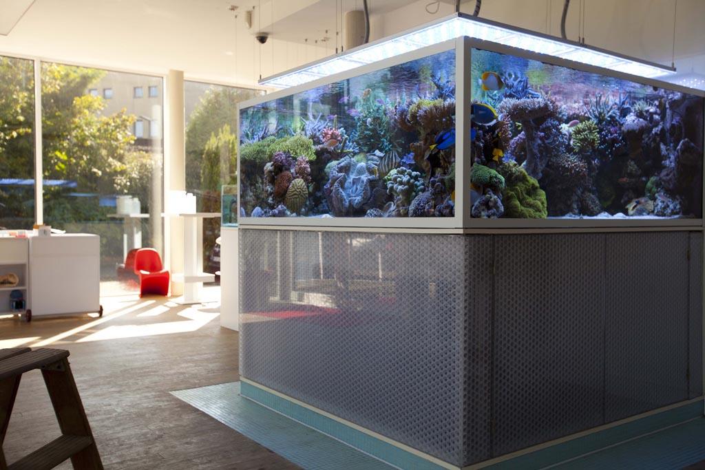 Salt Water Tester Aquarium