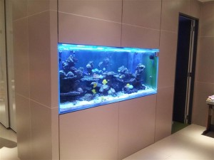 Salt Water Wall Aquariums