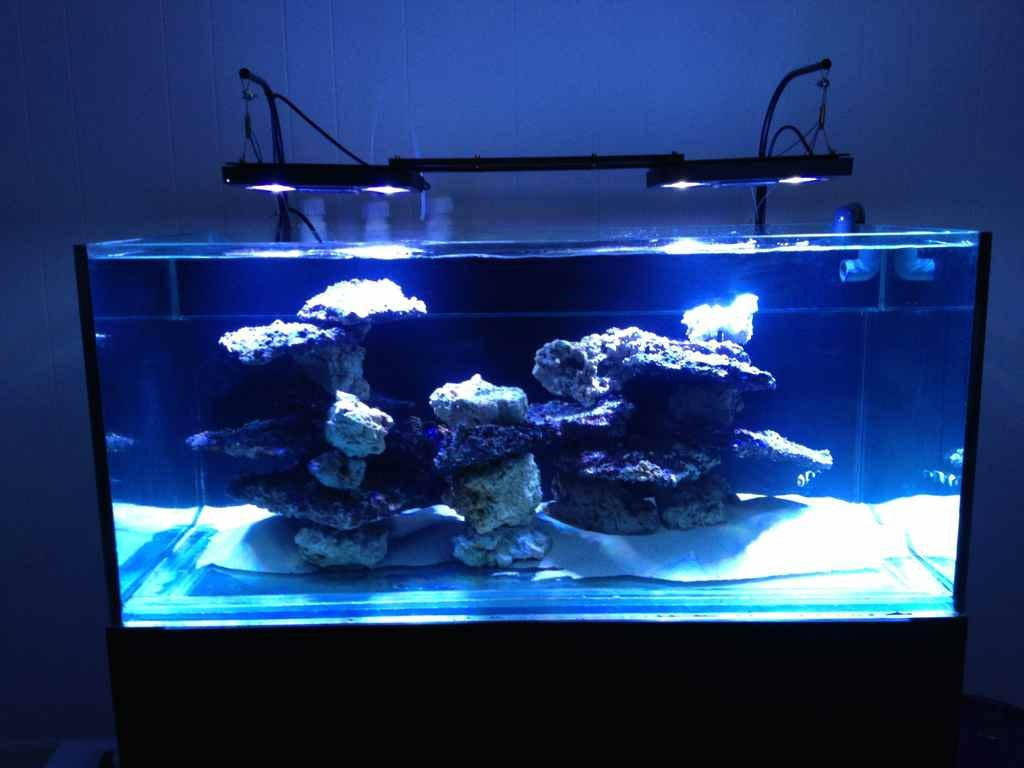 100 gallon saltwater aquariums the for Saltwater fish tank