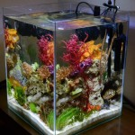 Saltwater Aquarium 30 Gallon