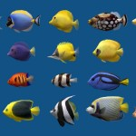 Saltwater Aquarium Fish Chart