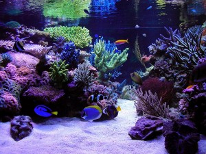 Saltwater Aquarium Fish Compatibility