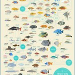 Saltwater Aquarium Fish Compatibility Chart