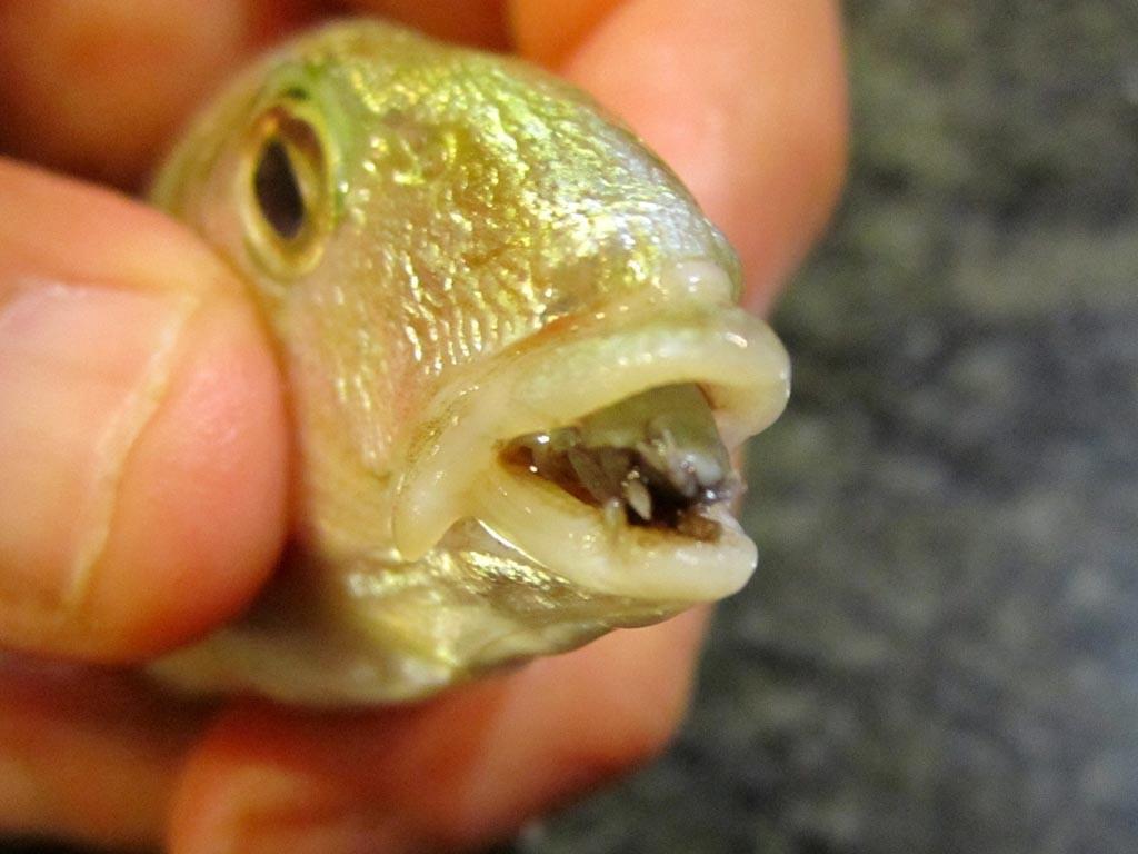 Saltwater Aquarium Fish Diseases